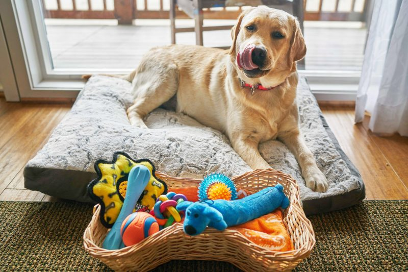 Check out our pet baskets.