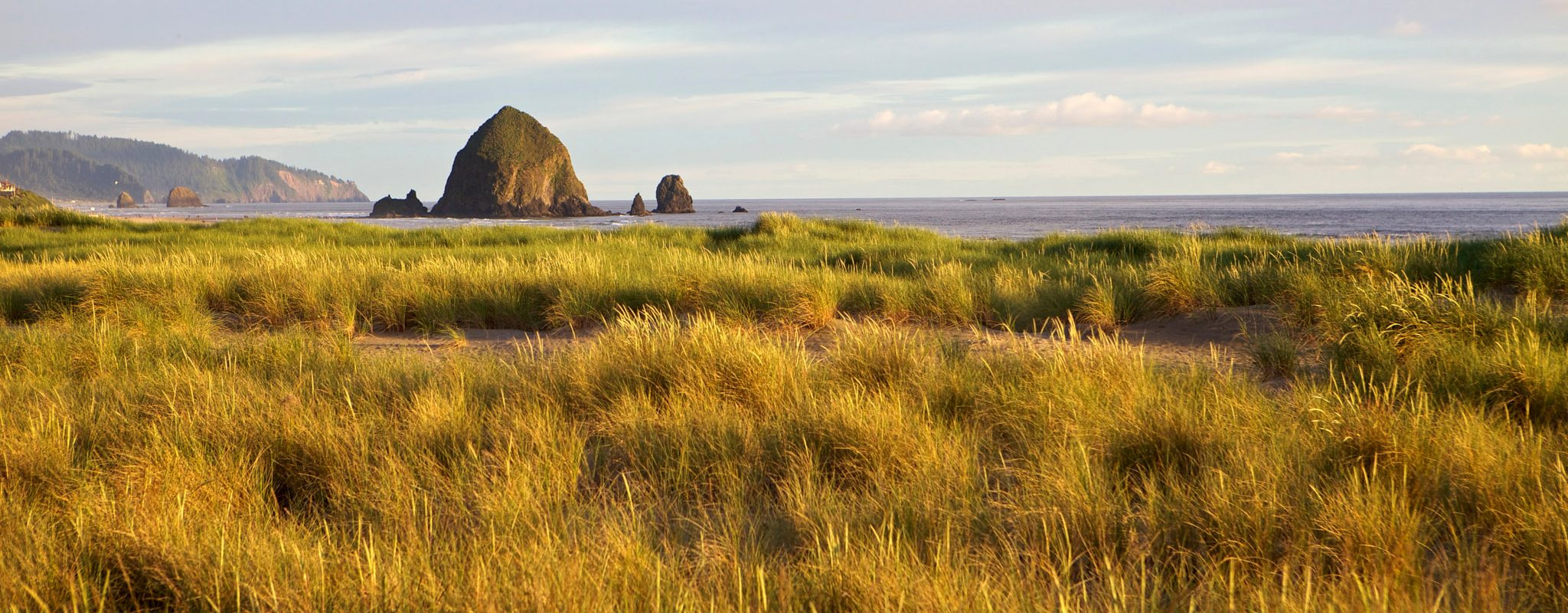 Dune grass in Cannon Beach.